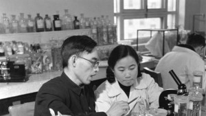This photo taken in the 1950s shows Tu Youyou, right, a pharmacologist with the China Academy of Chinese Medical Sciences in Beijing, working with Prof. Lou Zhicen to study traditional Chinese medicine. Three scientists from Ireland, Japan and China won the 2015 Nobel Prize in medicine on Monday, Oct. 5, 2015 for discovering drugs against malaria and other parasitic diseases that affect hundreds of millions of people every year. Tu was awarded the prize for discovering artemisinin, a drug that has helped significantly reduce the mortality rates of malaria patients. (Xinhua via AP)